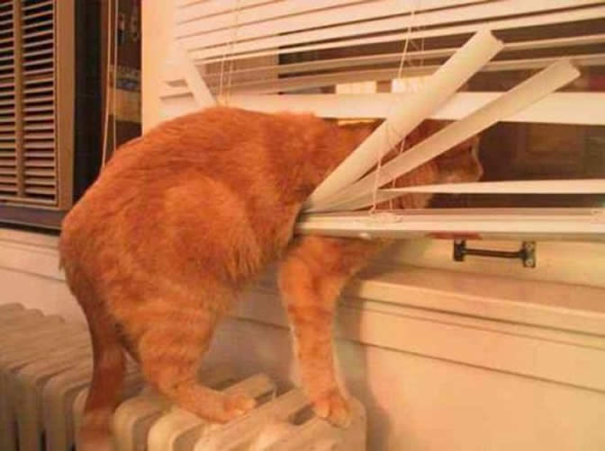 Cats vs Blinds