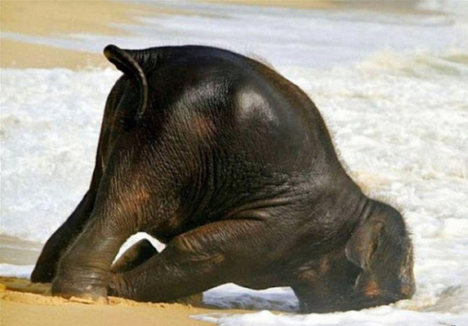 The Hungover Elephant