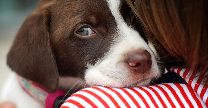 Dogs Understand When You Are Grieving