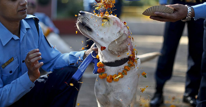 There Is a Festival in Nepal With a Day Devoted Solely to the Celebration of Man's Best Friends - the Dogs