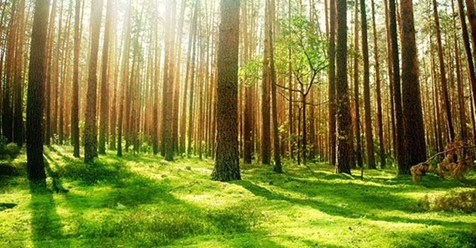 There Are A Whopping 3 Trillion Trees On The Planet. But Their Number Has Nearly Halved Since The Dawn Of Human Civilization