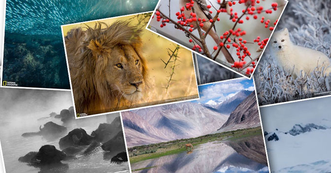 Seven Amazing Animals Photos