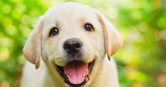 When a Dog Sees Its Owner Their Brain Releases Oxytocin