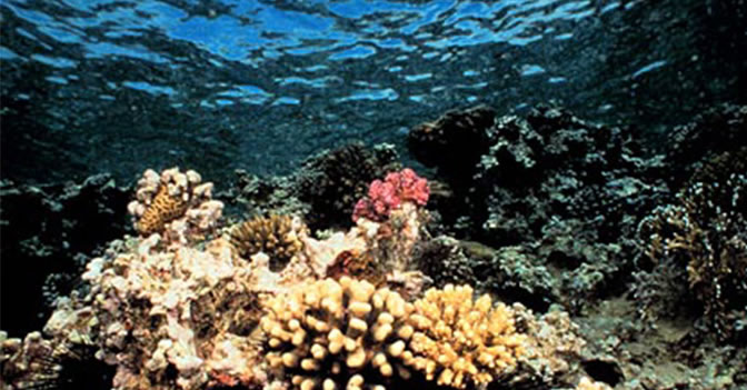 85% Of Plant Life Is Found in the Oceans